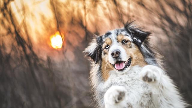 عکس سگ (۱۵)