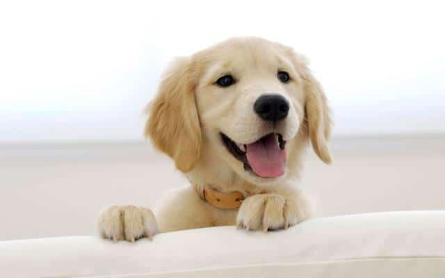 عکس سگ (۲)