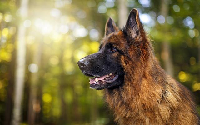 عکس سگ (۲۰)