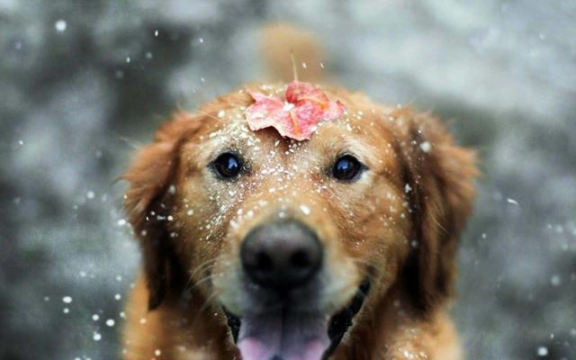 عکس سگ (۲۲)