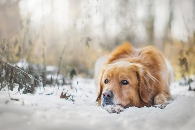 عکس سگ (۲۳)