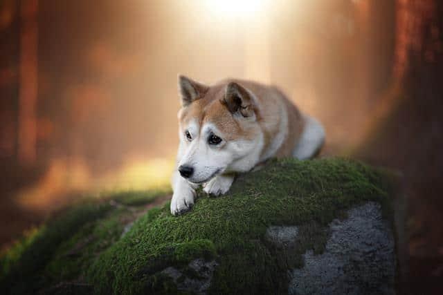 عکس سگ (۲۶)