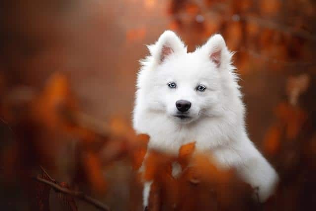 عکس سگ (۲۸)