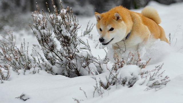 عکس سگ (۳)