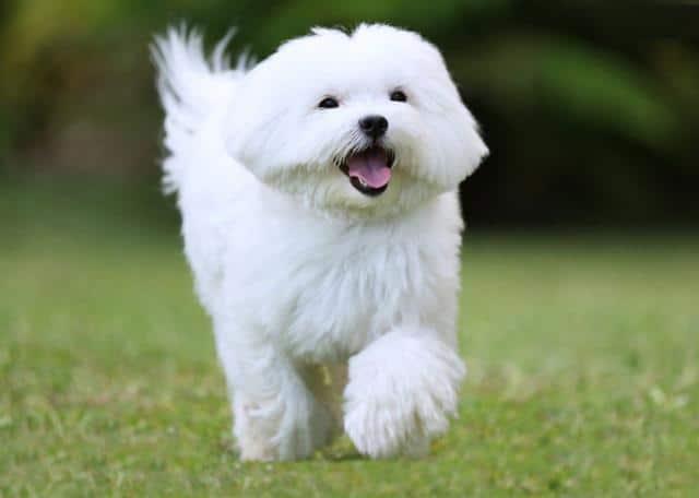 عکس سگ (۳۲)