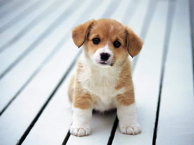 عکس سگ عاشقانه