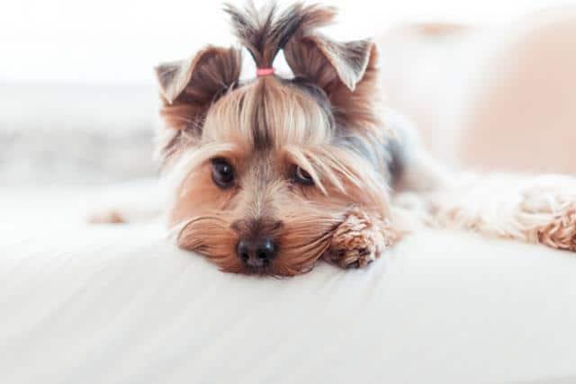 عکس سگ (۳۵)