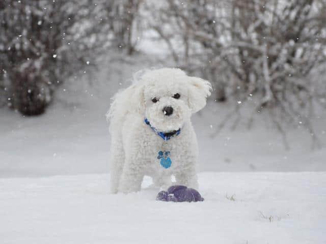 سگ فانتزی برای پروفایل