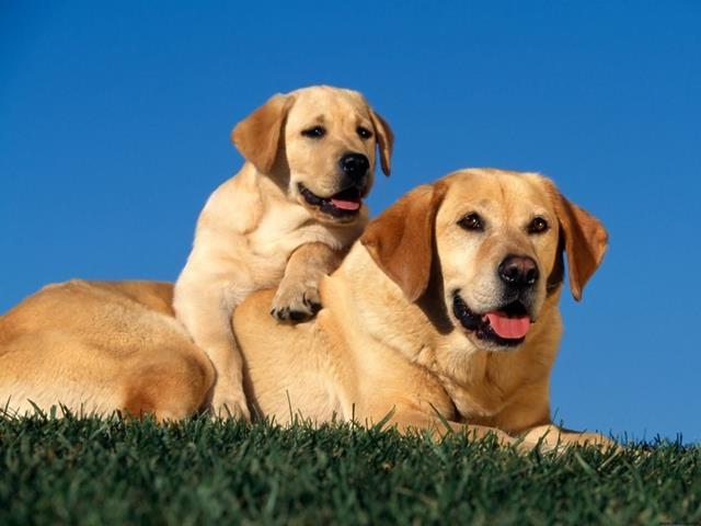 عکس سگ (۳۹)