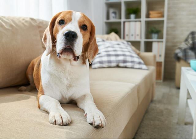 عکس سگ (۴)