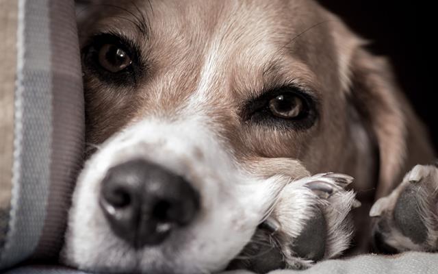 عکس سگ (۴۰)