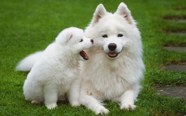 عکس سگ (۴۱)