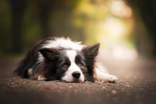 عکس سگ (۴۲)