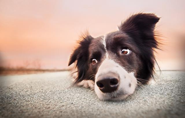 عکس سگ (۴۳)