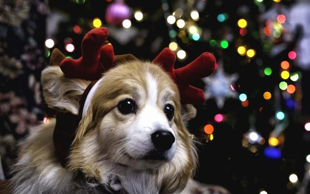 عکس سگ (۴۴)