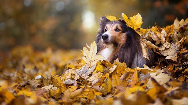عکس سگ (۴۹)