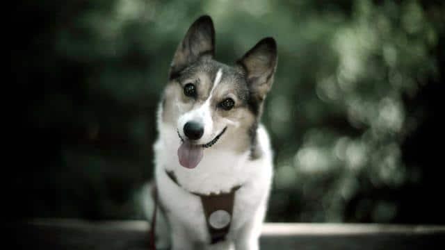 عکس سگ (۵)