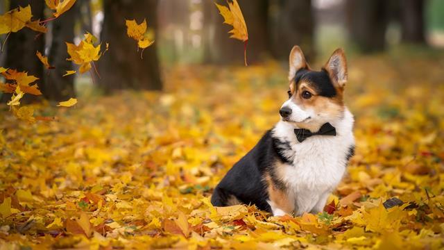 عکس سگ برای پروفایل دخترونه