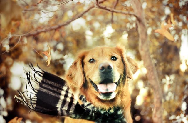 عکس سگ (۵۵)