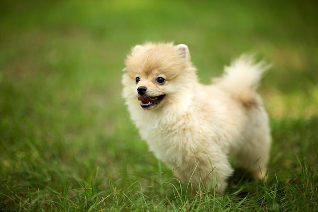 عکس سگ (۶)