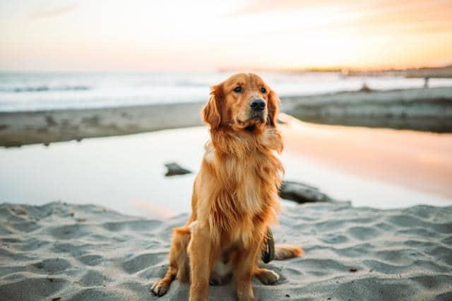 عکس سگ (۶۵)