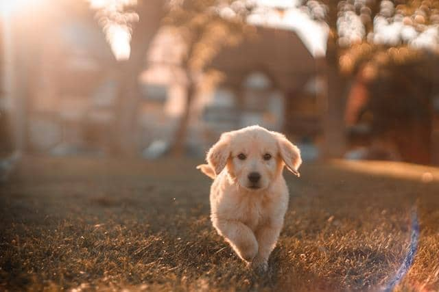 عکس سگ (۶۷)