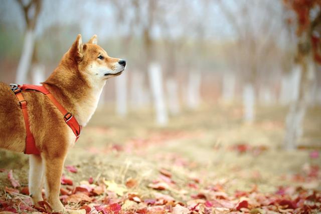 عکس سگ (۶۸)