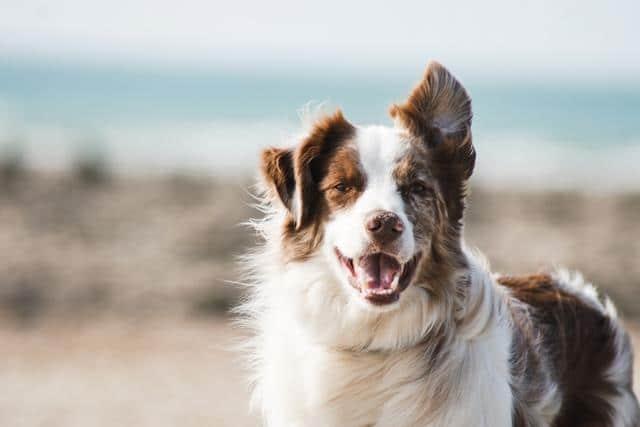 عکس سگ (۶۹)