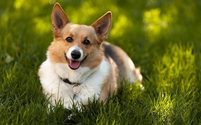 عکس سگ (۷)