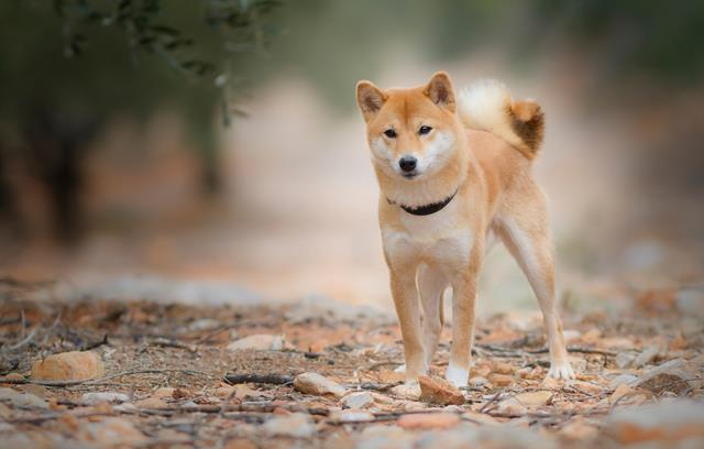 عکس توله سگ زیبا