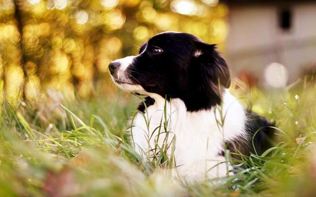 عکس سگ (۷۴)