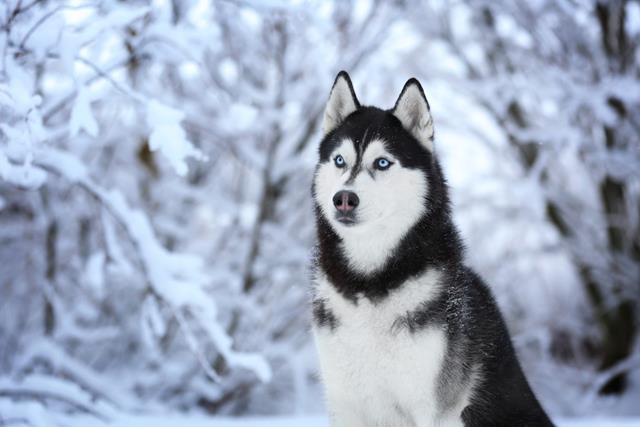 عکس سگ (۷۵)
