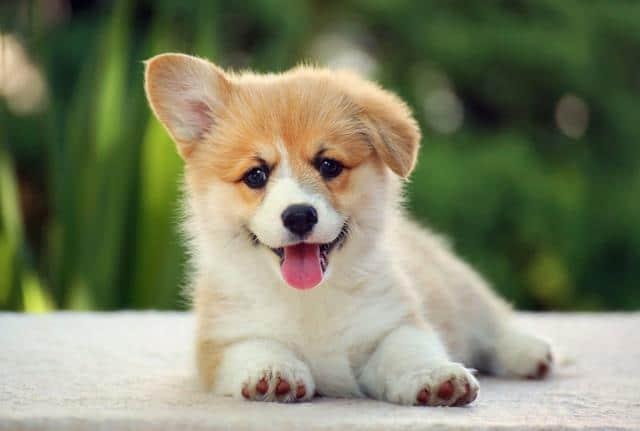 عکس سگ (۷۷)