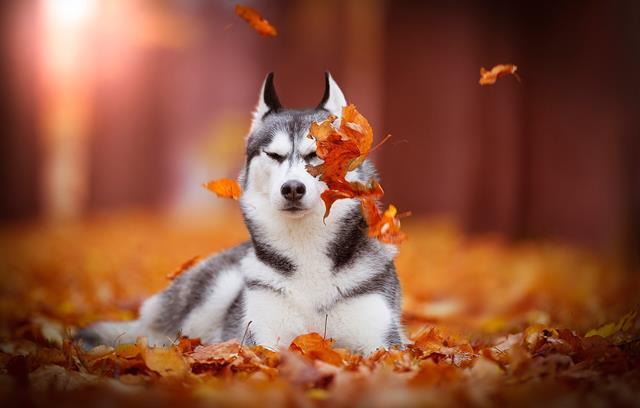 عکس سگ (۷۸)
