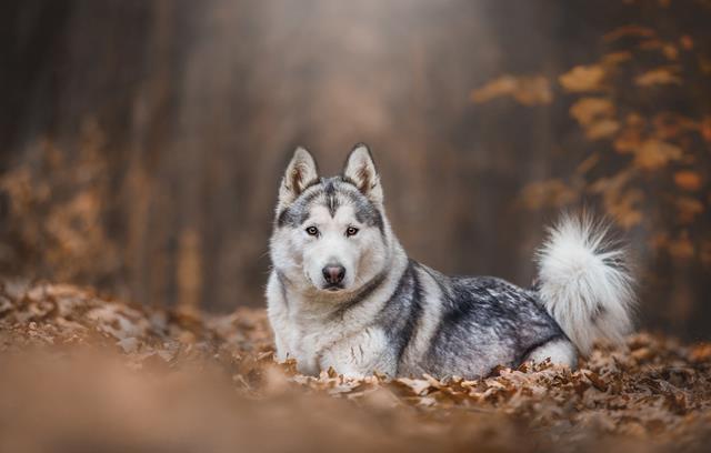 عکس سگ (۷۹)
