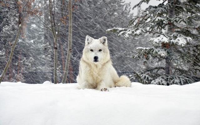 عکس سگ (۸)