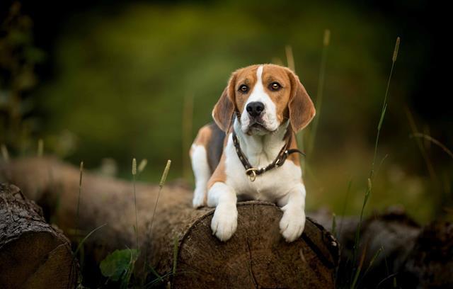 عکس سگ (۸۲)