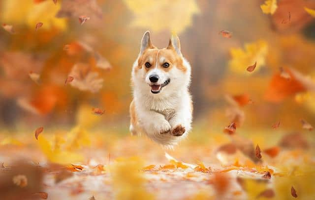عکس سگ (۸۴)