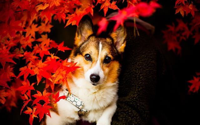 عکس سگ زیبا
