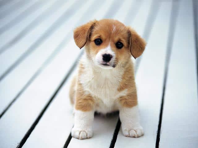 عکس سگ (۸۶)