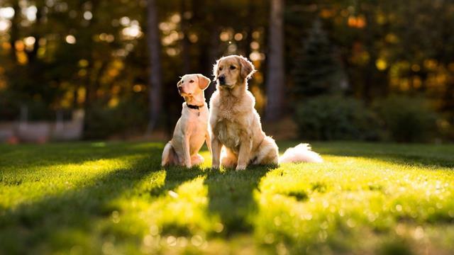 عکس سگ (۹)