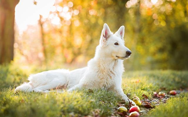 عکس سگ (۹۰)