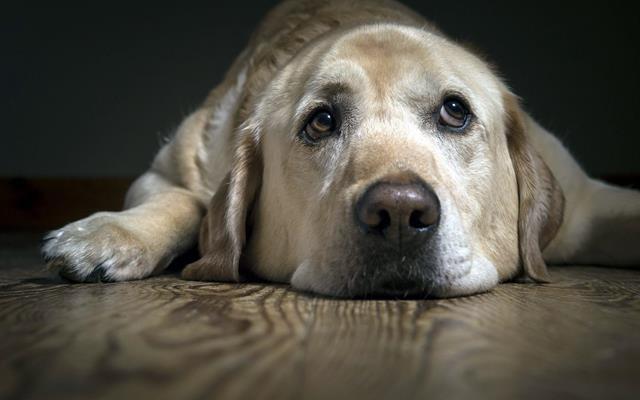 عکس سگ (۹۲)