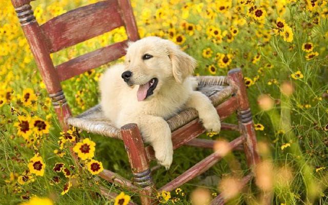 عکس سگ (۹۵)