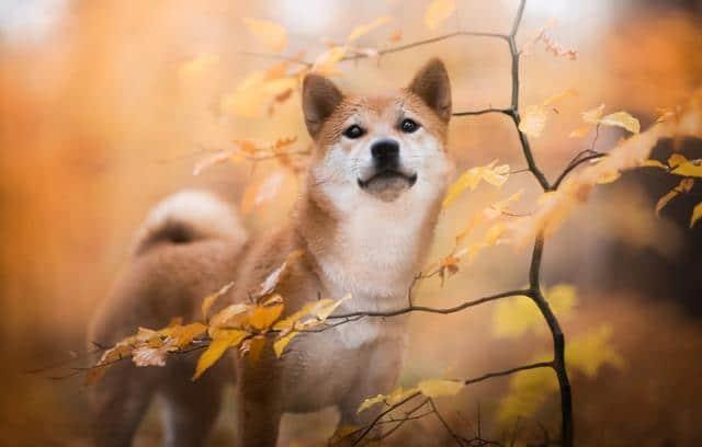 عکس سگ (۹۶)