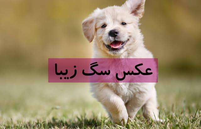 عکس سگ
